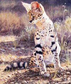 """""""Listening"""" - Serval"""