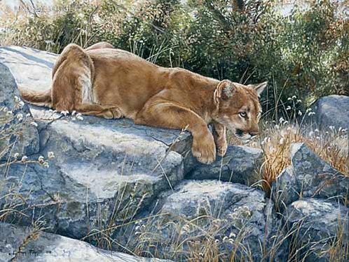"""Rising Tension"" - Cougar"