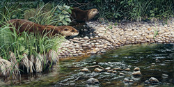"""""""Captivated"""" - River Otters"""
