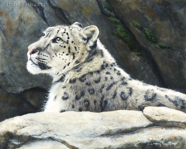 """Majestic Gaze"" - Snow leopard"