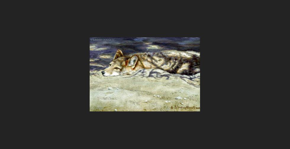 """""""Shadows"""" - Coyote"""