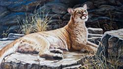 """""""Soaking in the Sun"""" - Cougar"""