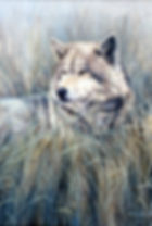 Wolves, Wolf, Canines