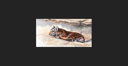 """""""Waiting"""" - Tiger"""