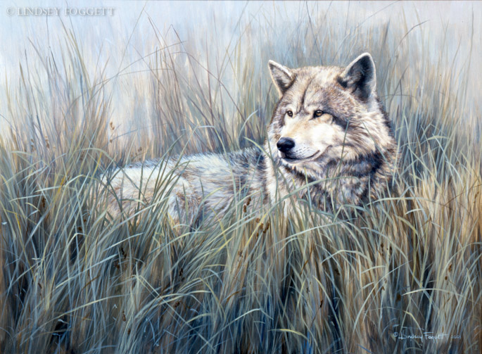 """""""Field Of Dreams"""" - Wolf"""