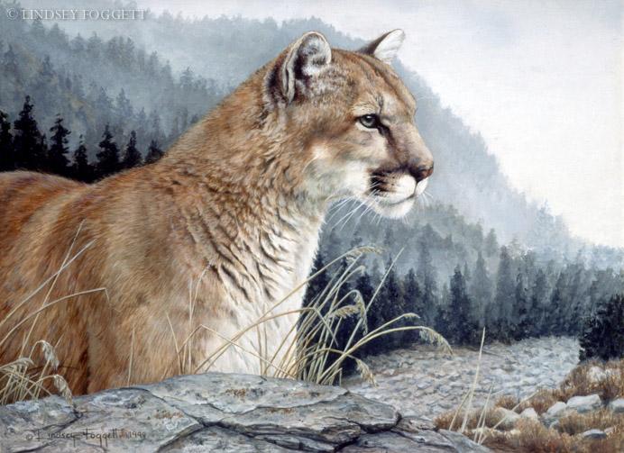 """""""Elusive Viewer""""- Cougar"""