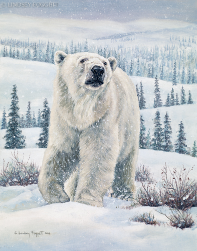 """New Territory"" - Polar Bear"