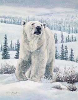 """""""New Territory"""" - Polar Bear"""