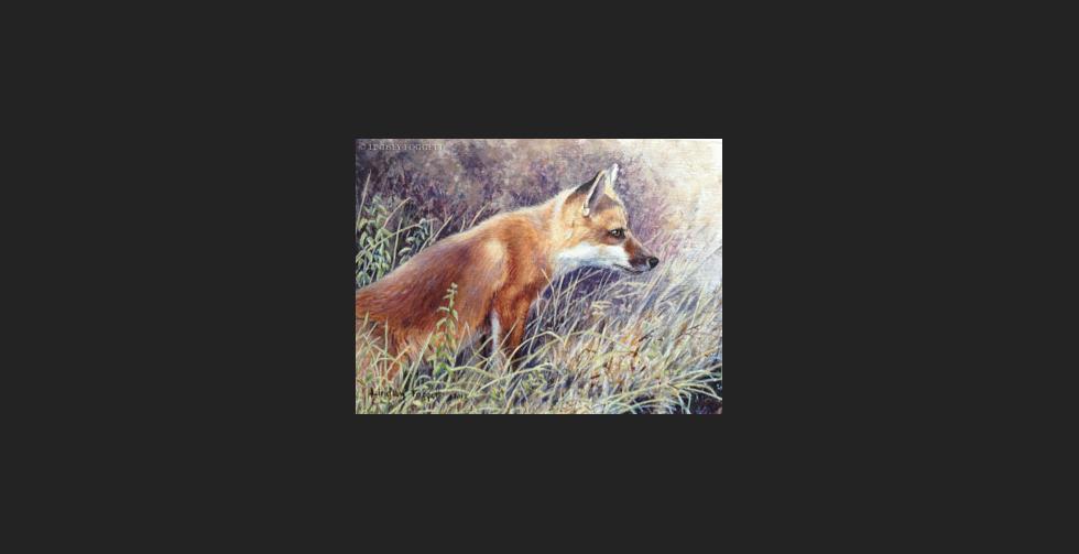 """Investigating"" - Fox"