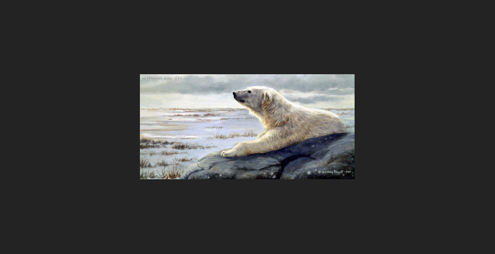 """Scent Of Dusk"" - Polar Bear"