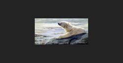 """""""Scent Of Dusk"""" - Polar Bear"""