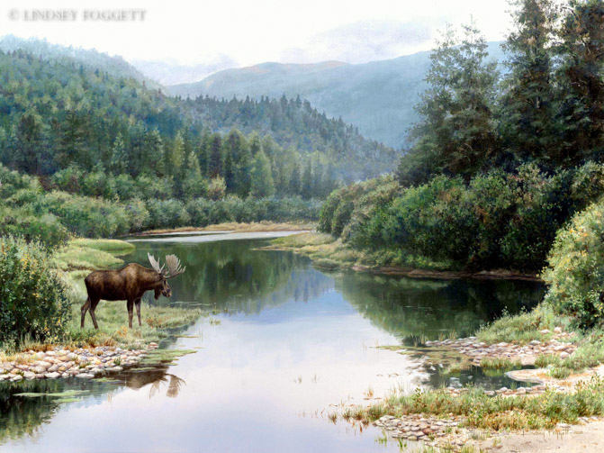 """Peaceful Reflections"" - Moose"