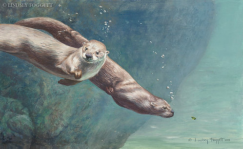 """Free Spirits"" - River Otters"