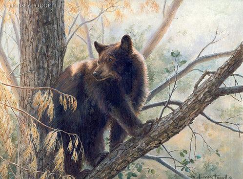 """""""Golden Lookout"""" - Black Bear"""