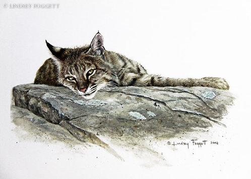 """Softly Rising"" - Bobcat"