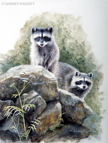 """""""King Of The Castle"""" - Raccoons"""