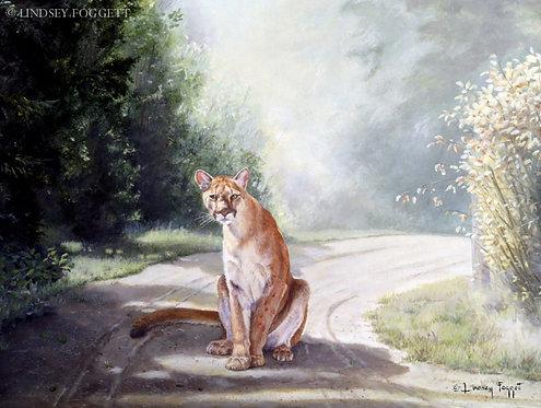 """Crossing Paths"" - Cougar"