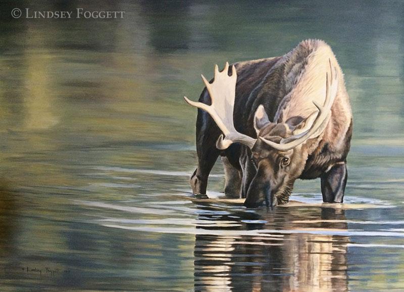 'Peaceful Solitude' - Moose