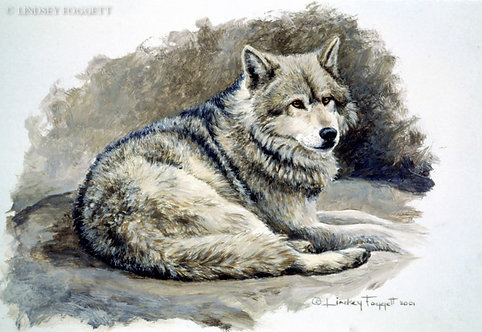 """Time Out"" - Grey Wolf (Miniature Painting)"