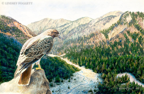 """""""Into The Valley"""" - Red Tail Hawk"""