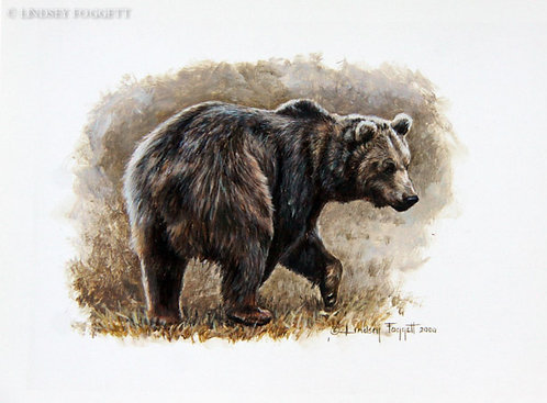 """Play Time I"" - Grizzly Bear (Miniature Painting)"