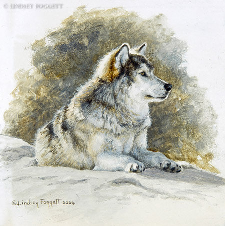 """""""Attention"""" - Grey Wolf (Miniature Painting)"""