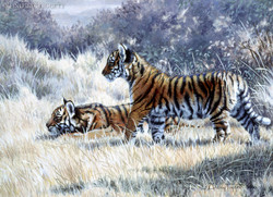"""""""Ready to Play""""- Tiger cubs"""