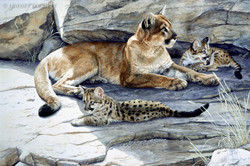 """""""First Litter"""" - Cougar & Cubs"""
