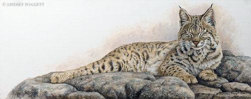 """""""Contentment"""" - Bobcat"""