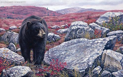 """""""Autumn Trail"""" - Black Bear"""
