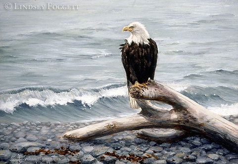 'Shore Watching' - Bald Eagle (Miniature Painting)