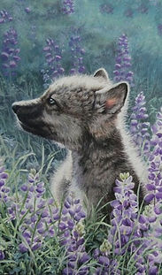 Wolf, Wolf Pups, Canines