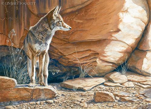 """Canyon Shadows"" - Coyote"