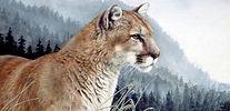 Mountain Lion, Cougar, Feline, Cats