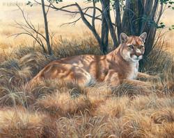 """""""American King"""" - Cougar"""