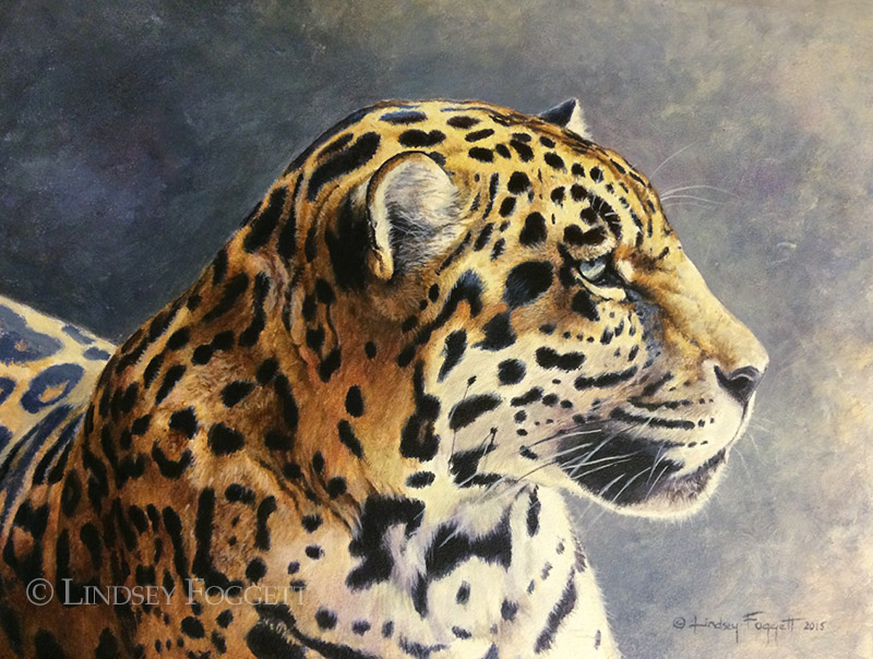 'Endangered Beauty' - Jaguar