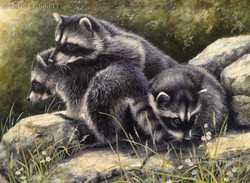 """""""Heap of Trouble"""" - Raccoons"""