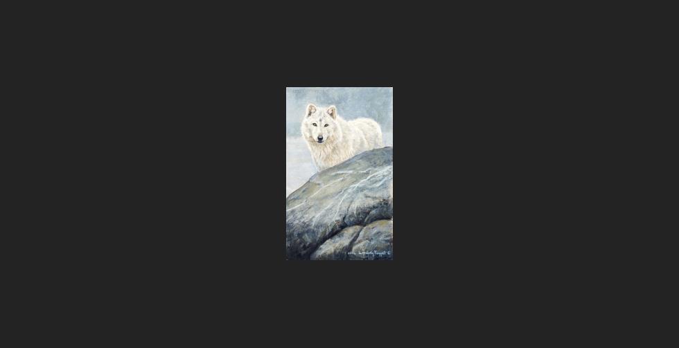 """""""White on White"""" - Arctic Wolf"""