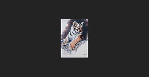 """""""Watching"""" - Tiger"""