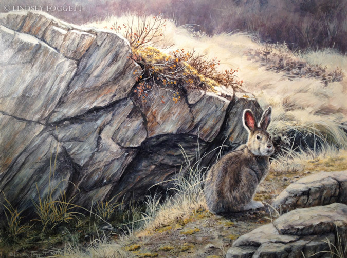 """""""Along the Trail"""" - Snowshoe Hare"""