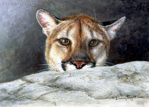 """Hide and Seek"" - Cougar (Miniature Painting)"
