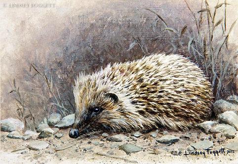 """""""Garden Visitor"""" - Hedgehog"""