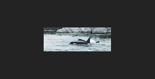 """""""The Residents"""" - Orcas"""