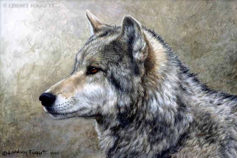 """Alpha Male Study"" - Wolf"