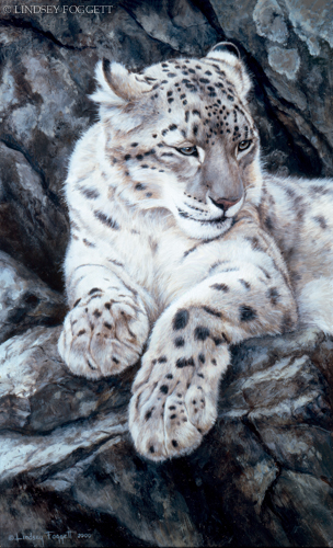 """Vantage Point"" - Snow Leopard"