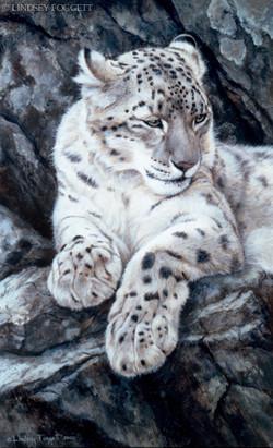"""""""Vantage Point"""" - Snow Leopard"""
