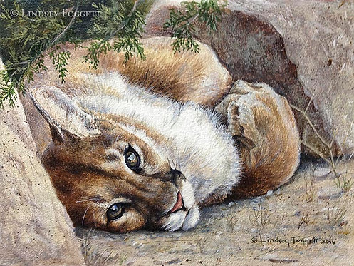 """Waking Up"" - Cougar (Miniature Painting)"