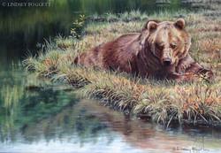 """""""Warm Autumn Days"""" - Grizzly Bear"""