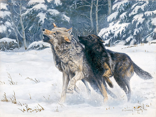 """""""Winter Sports"""" - Wolves"""