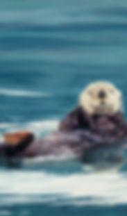Sea Otter, Otter, Moose, Birds